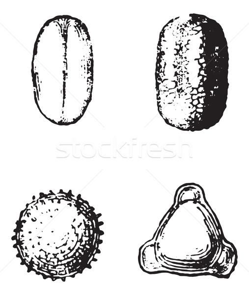 Virágpor klasszikus vésés gravírozott illusztráció szótár Stock fotó © Morphart
