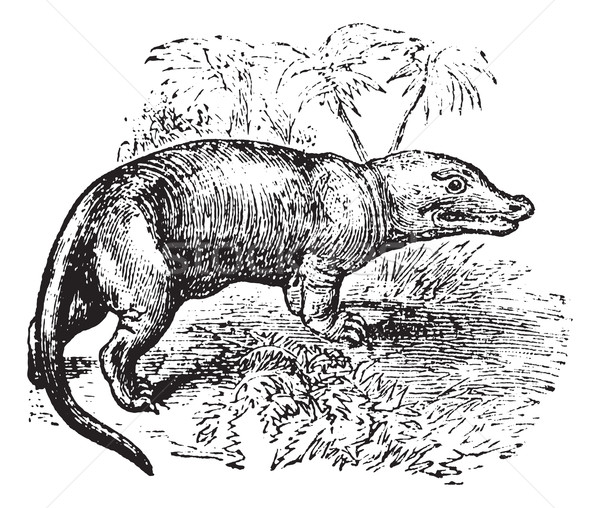 Epocă gravate ilustrare enciclopedie natură Imagine de stoc © Morphart