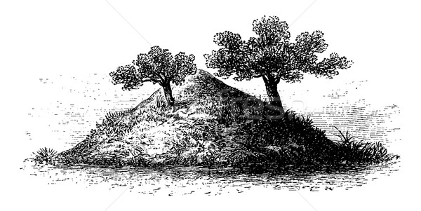 Termite Mound in Southern Africa, vintage engraving Stock photo © Morphart