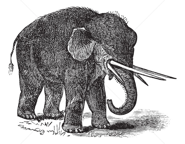 American mastodon or Mammut americanum vintage engraving Stock photo © Morphart