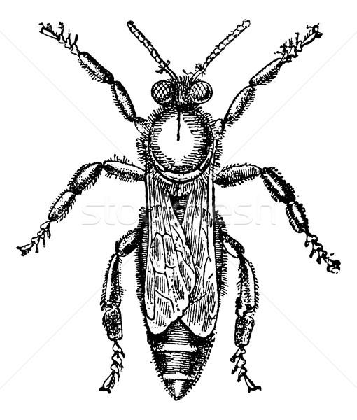 Feminino rainha abelha vintage gravado Foto stock © Morphart