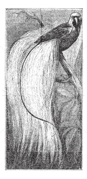 Zümrüt kuş cennet bağbozumu oyma oyulmuş Stok fotoğraf © Morphart