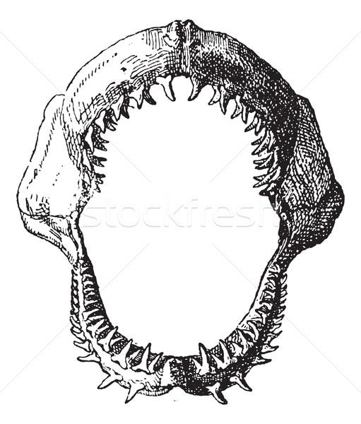 Cápa állkapocs klasszikus vésés gravírozott illusztráció Stock fotó © Morphart