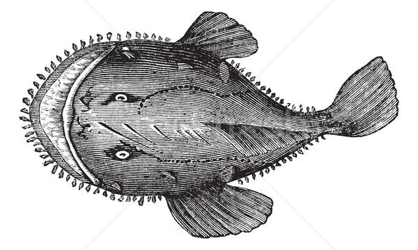 The American anglerfish or Lophius americanus. Vintage engraving Stock photo © Morphart