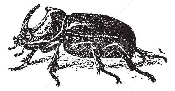 ヨーロッパの サイ カブトムシ ヴィンテージ 刻ま 実例 ストックフォト © Morphart