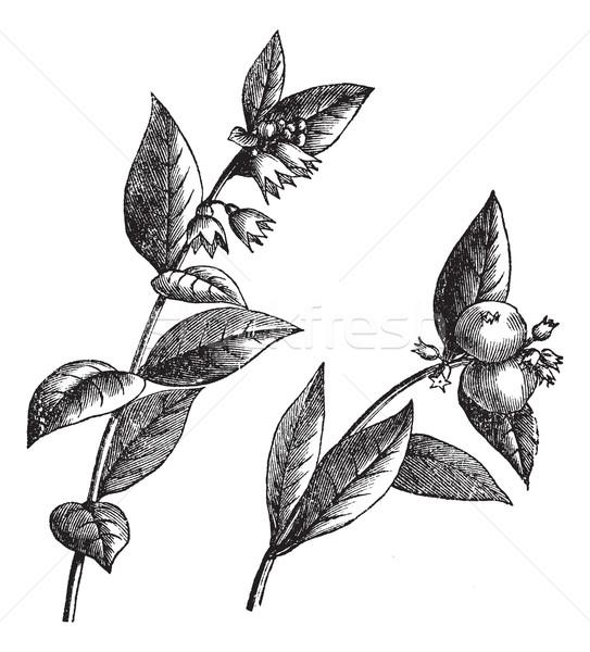 ヴィンテージ 彫刻 刻ま 実例 百科事典 花 ストックフォト © Morphart