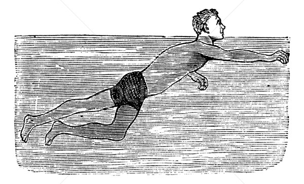 Dog Paddling, vintage engraved illustration Stock photo © Morphart
