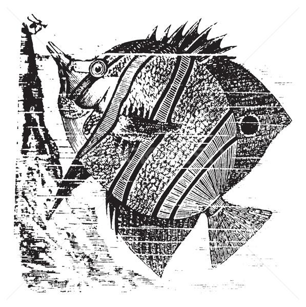 Vintage pico edad grabado ilustración Foto stock © Morphart