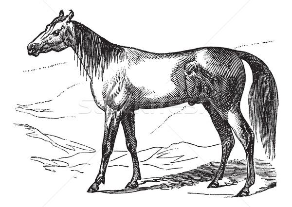 Arabian Horse vintage engraving Stock photo © Morphart