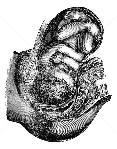 Eljegyzés leszármazás fej klasszikus vésés gravírozott Stock fotó © Morphart