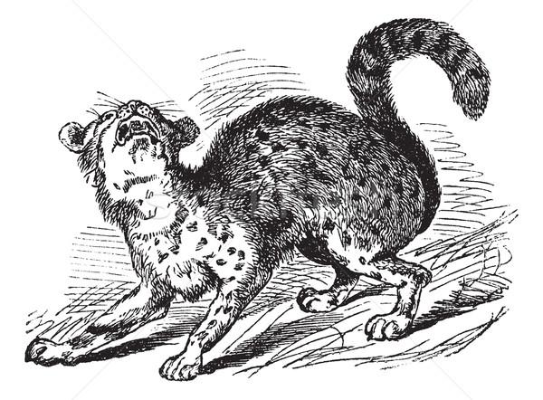 ヴィンテージ 彫刻 虎 猫 古い 刻ま ストックフォト © Morphart