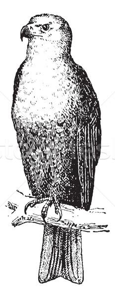 Adler Jahrgang Gravur graviert Illustration Zweig Stock foto © Morphart