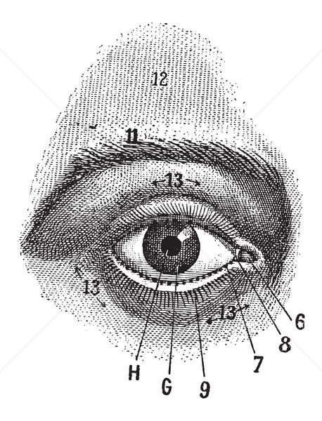 表示 人間 眼 ヴィンテージ 彫刻 ストックフォト © Morphart