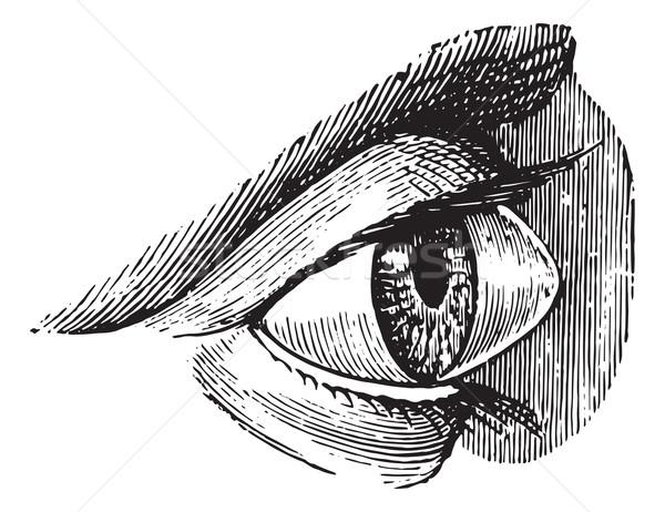 Bağbozumu oyma oyulmuş örnek tıp sözlük Stok fotoğraf © Morphart