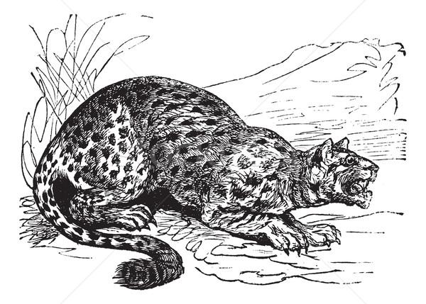 猫 虎 ヴィンテージ 刻ま 実例 ストックフォト © Morphart