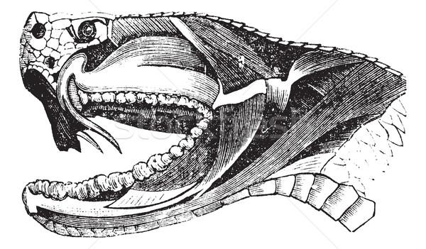 Serpente cabeça vintage velho gravado Foto stock © Morphart
