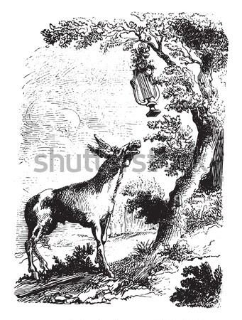 Deers and Reindeer, vintage engraving. Stock photo © Morphart