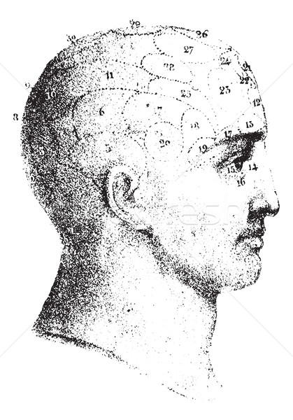 Type cranial given by Spurzheim in profile, vintage engraving. Stock photo © Morphart