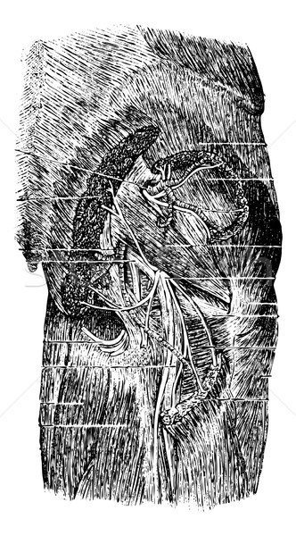 Muscles, Vessels and Nerves of the Posterior Region of the Butt Stock photo © Morphart