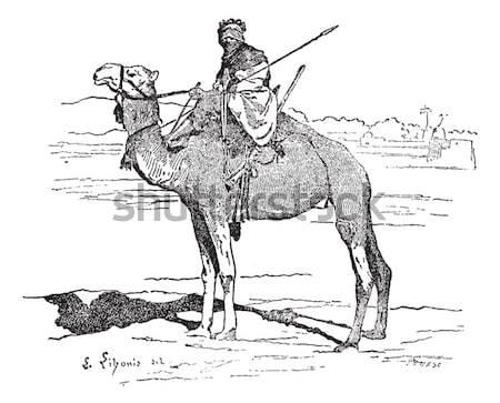 Templar on horse, vintage engraving. Stock photo © Morphart