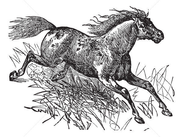 Mustang vintage caballo edad grabado Foto stock © Morphart