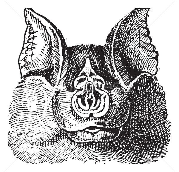 Patkó klasszikus vésés gravírozott illusztráció szótár Stock fotó © Morphart