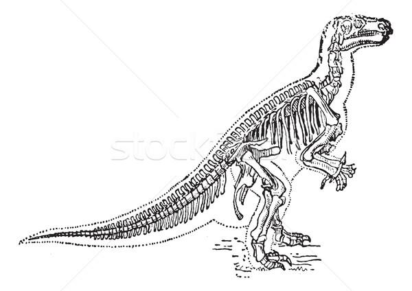 Iguanodon vintage engraving Stock photo © Morphart