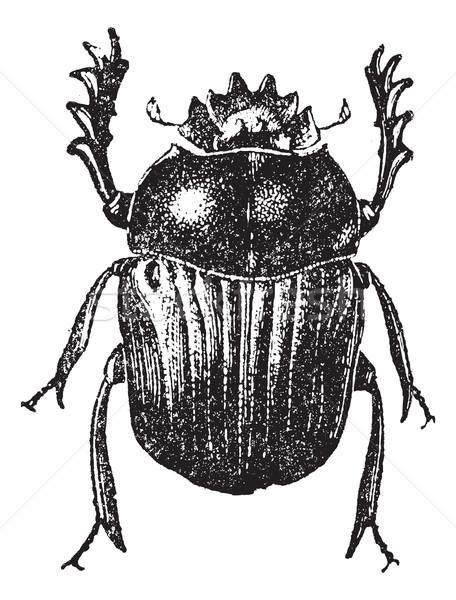 Beetle isolated on white, vintage engraving. Stock photo © Morphart