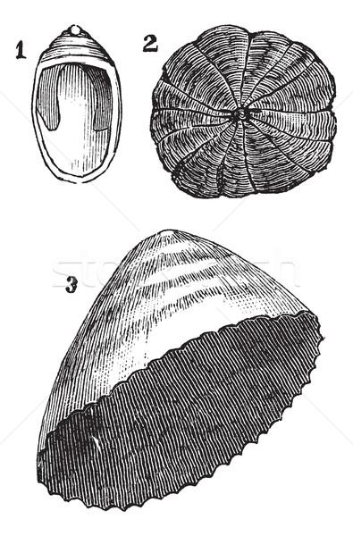 Paraplu vintage gegraveerd illustratie encyclopedie zwarte Stockfoto © Morphart