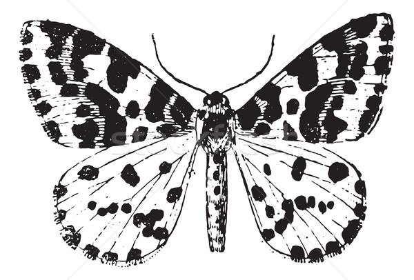 Moth, vintage engraving. Stock photo © Morphart