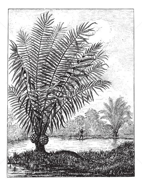 слоновая кость дерево Vintage иллюстрация Сток-фото © Morphart