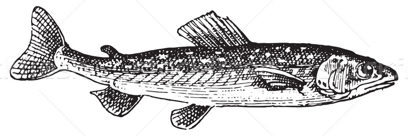 魚 ヴィンテージ 彫刻 刻ま 実例 辞書 ストックフォト © Morphart