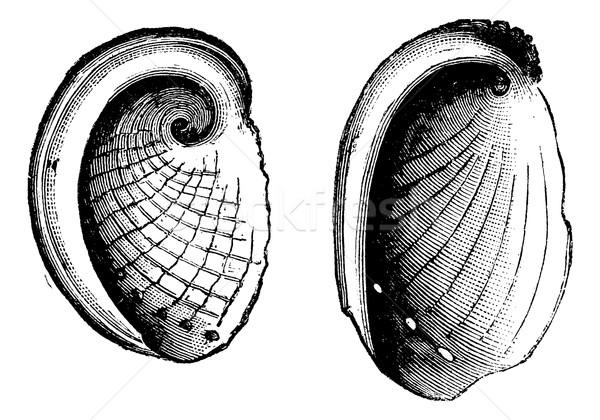 Vintage gegraveerd illustratie encyclopedie natuur Stockfoto © Morphart