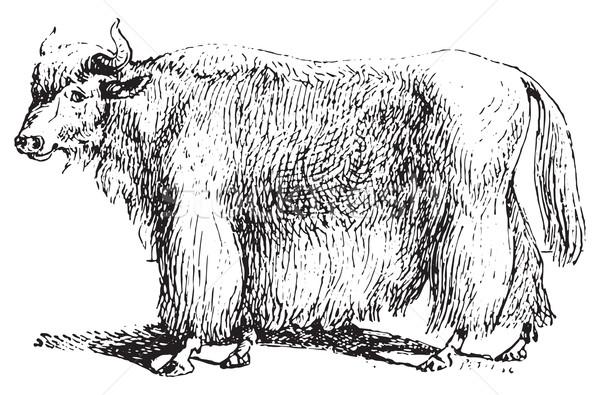 Yak, vintage engraving. Stock photo © Morphart