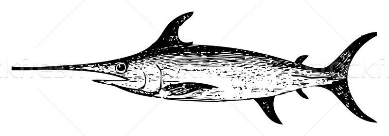 Oude zwaardvis gegraveerd illustratie geïsoleerd Stockfoto © Morphart