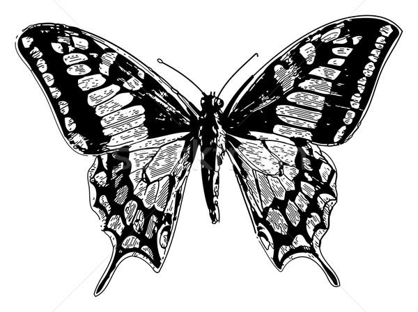 Old world swallowtail or papilio machaon Stock photo © Morphart