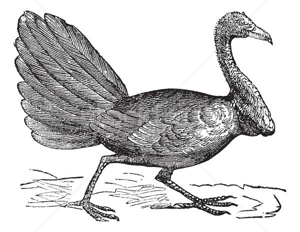 Vintage gravure gravé illustration encyclopédie plumes Photo stock © Morphart