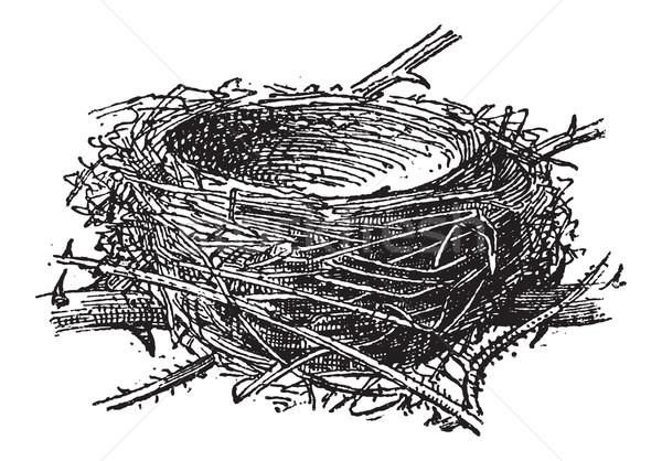 Nest of the Blackcap or Sylvia atricapilla, vintage engraving Stock photo © Morphart