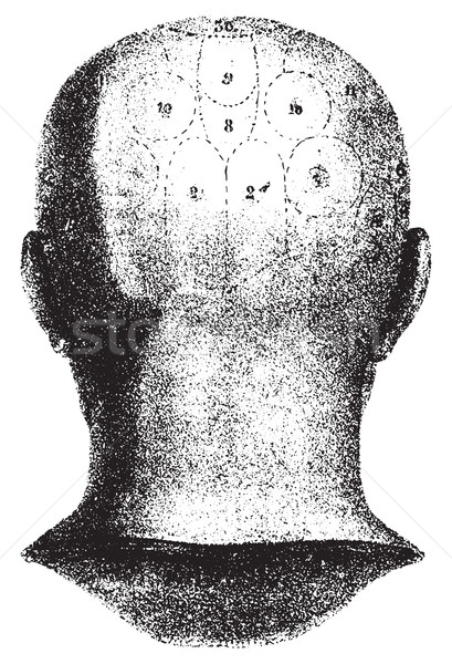 Type cranial given by Spurzheim, rear view. vintage engraving. Stock photo © Morphart