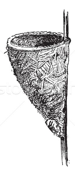 Nest of the Wren or Troglodytes sp., vintage engraving Stock photo © Morphart