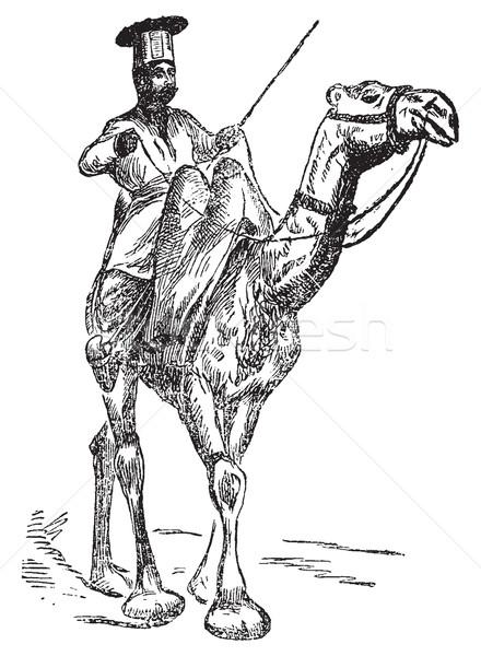 верблюда Vintage иллюстрация журнала Сток-фото © Morphart