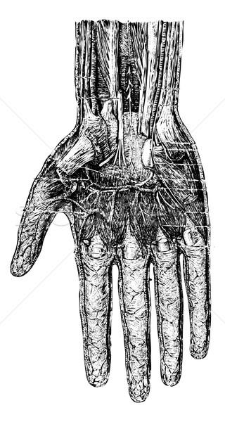 Mély réteg kéz felület klasszikus vésés Stock fotó © Morphart