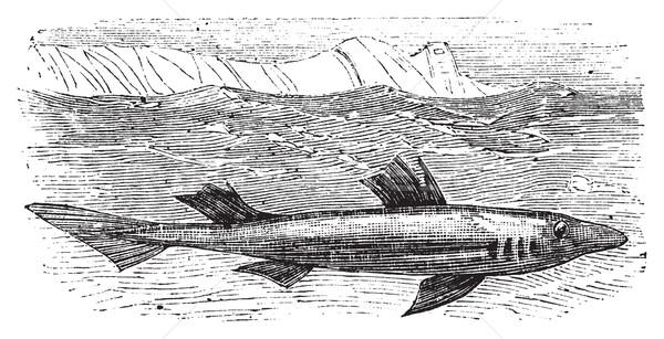 Modder haai vintage oude antieke Stockfoto © Morphart