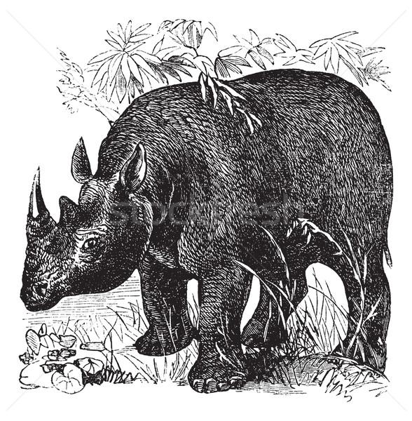 Preto rinoceronte vintage velho gravado Foto stock © Morphart