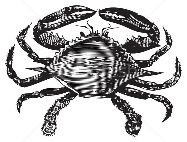 Blue Crab engraving (callinectes hastatus) Stock photo © Morphart