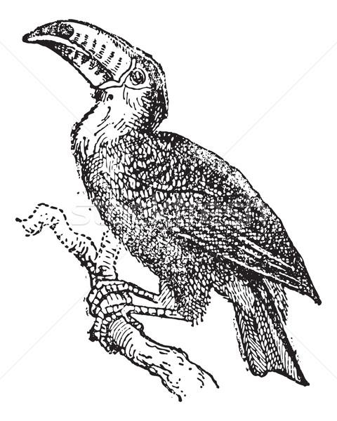 Toucan, vintage engraving. Stock photo © Morphart