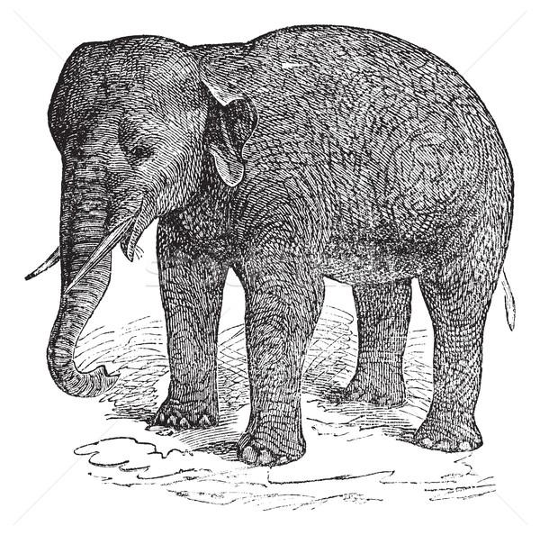 ázsiai elefánt klasszikus vésés öreg gravírozott Stock fotó © Morphart