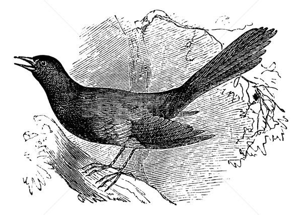 Vintage gravado ilustração enciclopédia Foto stock © Morphart