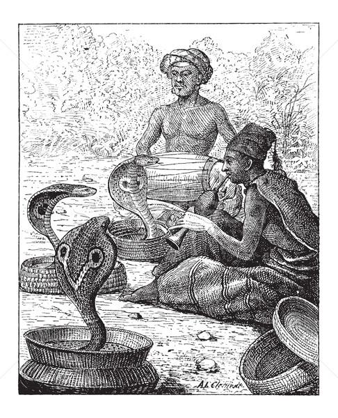 Cobra or Naja sp., vintage engraving Stock photo © Morphart