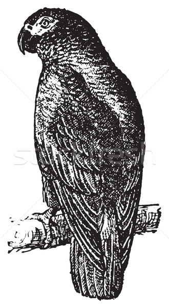 Papağan bağbozumu oyma oyulmuş örnek sözlük Stok fotoğraf © Morphart
